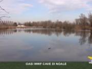 oasi wwf cave di noale