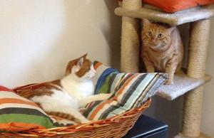 Due dolcissimi gattoni cercano urgentemente una sistemazione