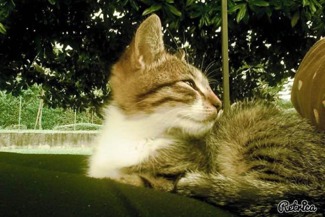 gattina soriana è stata trovata abbandonata