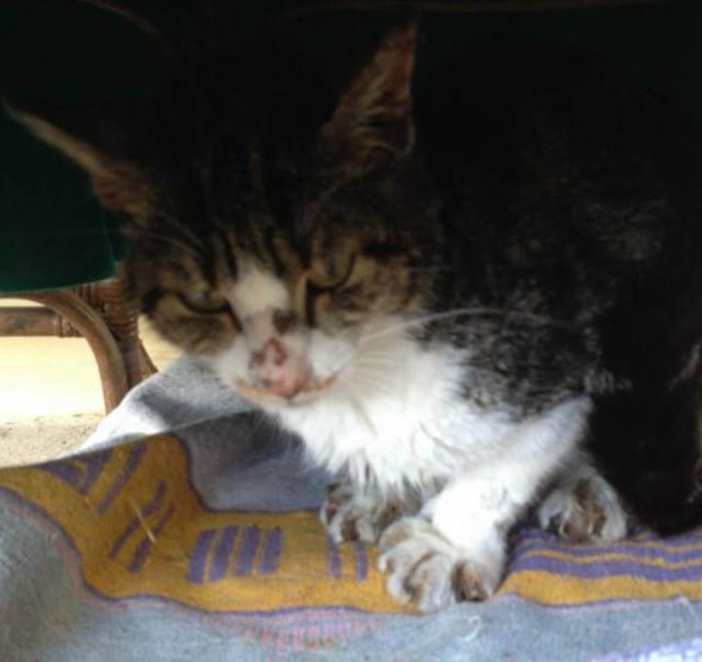 Aiutiamo questa gattina molto sfortunata trovata malconcia e denutrita