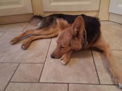 Alice è una cagnolina di pochi mesi, subito abbandonata