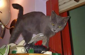 Facciamo dimenticare a questa gattina la triste esperienza dell'abbandono