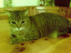 gattino affettuoso