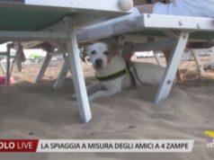 bau bau beach a misura di animali