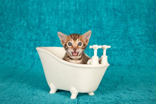 gatto tira l'acqua bolletta