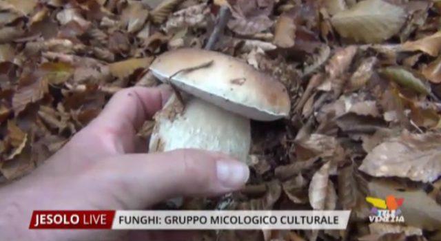 gruppo micologico culturale