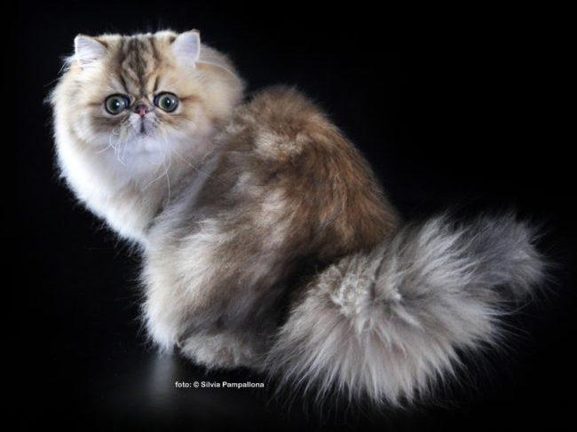 I gatti pi belli del mondo fanno tappa venezia venezia - Cucina casalinga per gatti ...