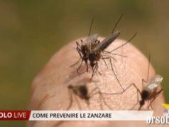 prevenire le zanzare