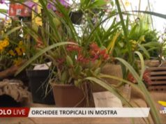 Orchidee Tropicali a Teatro