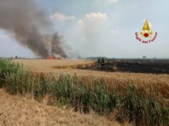 Incendio di un campo di grano coinvolti 6 ettari