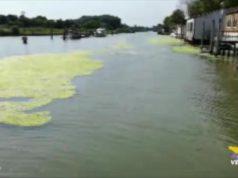 Invasione delle alghe: Allarme a San Giuliano