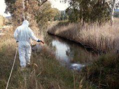 Mirano, disinfestazione contro le zanzare nei fossati