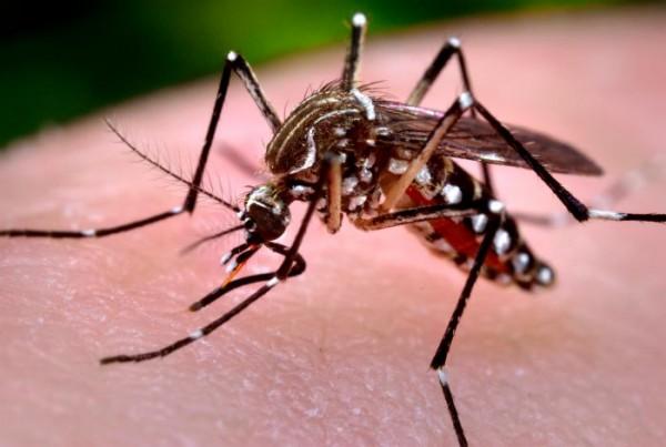 Zanzara Day: a Musile la consegna delle compresse antilarva