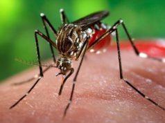 2 casi di contagio da virus West Nile a Portogruaro
