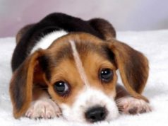 Il patentino per i proprietari di cani: al via il corso gratuito - Televenezia