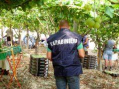 Trovati 8 lavoratori in nero nel settore agricolo della provincia
