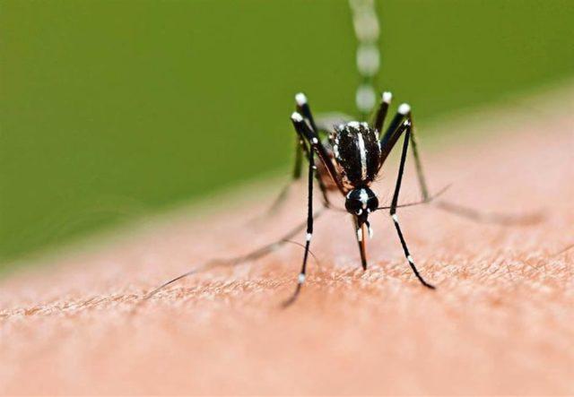 Virus West Nile: 3 persone contagiate nell'ultima settimana