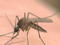 virus West Nile veneto orientale