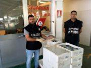 Blitz al mercato ittico di Venezia: sequestrati 115 Kg di pesce