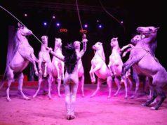 Il grande ed internazionale Circo David Orfei a Mestre dal 27 settembre