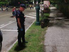 San Donà: lite con il compagno, volano mobili in strada: arrestata
