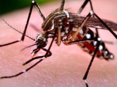 Virus West Nile: deceduta una 82 enne di San Donà