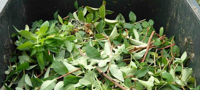 Raccolta di verde e ramaglie a Musile: la consegna dei contenitori